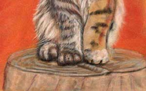 Maine Coon cat pastel drawing
